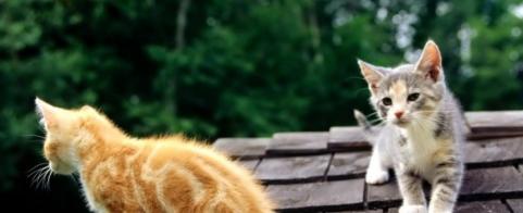 roof-kittens